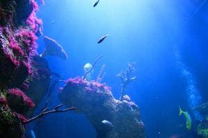 Fischbecken